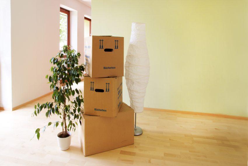 Umzug in die neue Traumwohnung - Umzugskartons, Stehlampe, Blumenstock, leere Wohnung